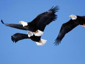 3 eagles
