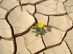 flower_in_desert1
