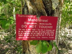 manchinel 2