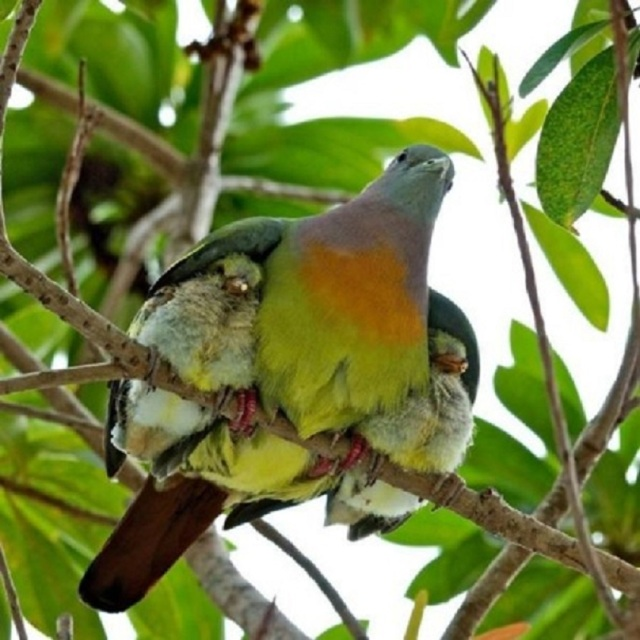 mommy-bird-shelters-babies