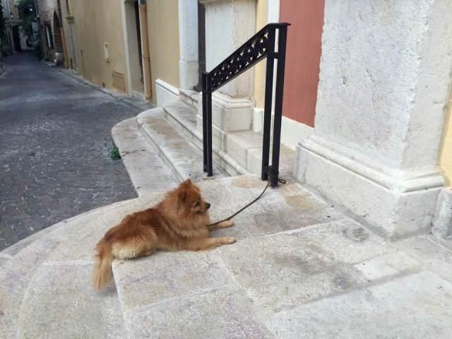 dog in Nice