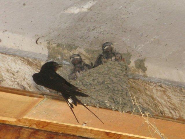 Sparrows 2