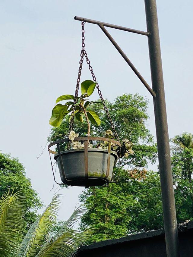 My surprise plant