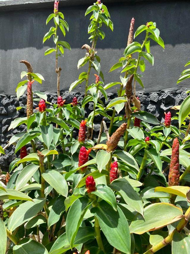 Plants Garden 2